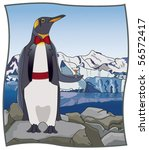 upscale penguin   click on my... | Shutterstock .eps vector #56572417