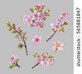 watercolor hand painted flowers.... | Shutterstock . vector #565881847