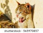 animal teasing cute cat | Shutterstock . vector #565970857