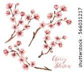 Cherry Blossom Spring Flowers...