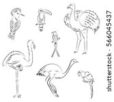 hand drawn exotic tropical... | Shutterstock .eps vector #566045437