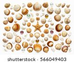 Pattern Of Seashells  Glass...