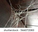 frost on spider net | Shutterstock . vector #566072083
