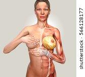 3d illustration of a woman... | Shutterstock . vector #566128177