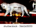 the cat in the glass | Shutterstock . vector #566165053