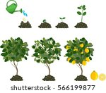 plant growing from seed to... | Shutterstock .eps vector #566199877