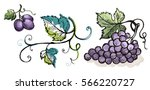 watercolor ripe grape with... | Shutterstock .eps vector #566220727