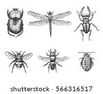 big set of insects bugs beetles ... | Shutterstock .eps vector #566316517