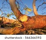 sunset branch   Shutterstock . vector #566366593