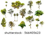 Collection Of Tropical Tree In...