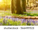 Sunlit Spring Forest