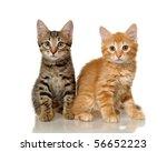 Stock photo kittens 56652223