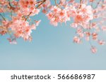 beautiful vintage sakura flower ... | Shutterstock . vector #566686987