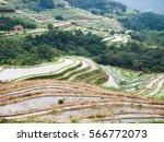 rice field terraces in taiwan | Shutterstock . vector #566772073