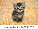 Stock photo a cute small kitten looking at the camera sitting in a hallway 566791393