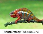 chameleon | Shutterstock . vector #566808373