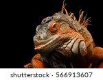 Close Up Head Smiling Reptile ...