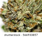 macro photo of a cannabis bud | Shutterstock . vector #566933857