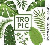 tropical vector illustration... | Shutterstock .eps vector #567060343