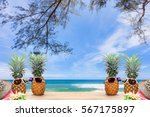 pineapple with sunglasses and... | Shutterstock . vector #567175897