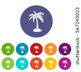 palm set icons in different... | Shutterstock .eps vector #567245023