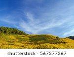 field landscape | Shutterstock . vector #567277267