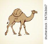 camel isolated on white...   Shutterstock .eps vector #567363667