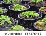 Carnivorous Plants In Black...