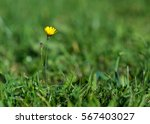 one delicate yellow flower