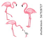 Set Of Watercolor Flamingos...
