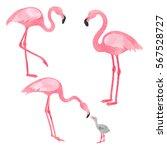 Set Of Watercolor Flamingos...