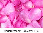 Stock photo the fresh light pink rose petal background with water rain drop 567591313