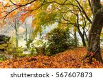 Autumn Landscape In Garden