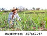 middle aged farmer and his farm | Shutterstock . vector #567661057