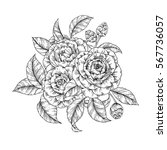vector hand drawn bouquet of... | Shutterstock .eps vector #567736057