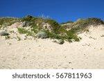 grass  plants and foliage grow...   Shutterstock . vector #567811963
