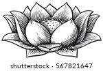 lotus flower   vintage engraved ... | Shutterstock .eps vector #567821647