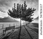 avenue of trees on the shore of ... | Shutterstock . vector #567826117
