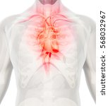 3d illustration of heart   part ... | Shutterstock . vector #568032967
