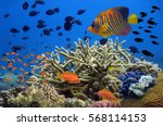 Coral Reef Underwater Panorama...