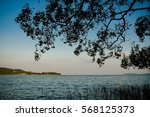 trees along the gulf of... | Shutterstock . vector #568125373