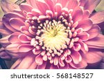Bright Pink Aster Flower Close...