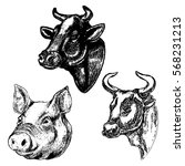 Hand Drawn Cow And Pig Heads...