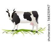 vector illustration. white cow... | Shutterstock .eps vector #568250947