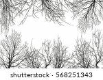 trees view from below | Shutterstock .eps vector #568251343