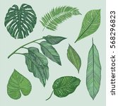 tropical leaves ink drawing... | Shutterstock .eps vector #568296823