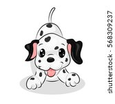 dalmatian cute dog at the white ... | Shutterstock .eps vector #568309237