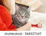 Woman Combing Cute Cat With...