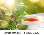 sage tea with green leaves... | Shutterstock . vector #568330237