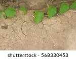 ivy plant on dried cracked... | Shutterstock . vector #568330453
